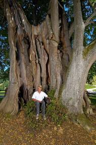 The Najevnik linden tree - the oldest of all the linden trees in Slovenia is said to be over 700 years old.